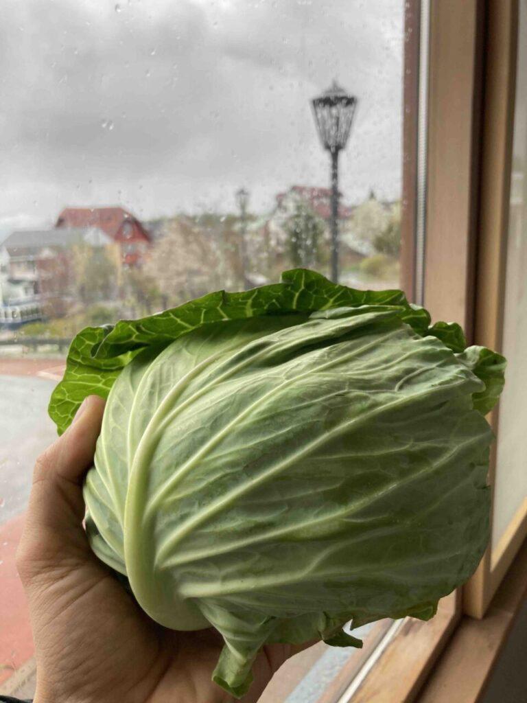 北杜市 移住 野菜